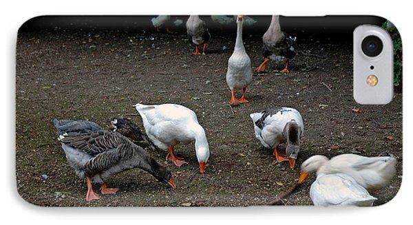 Barn Yard Quackers IPhone Case by LeeAnn McLaneGoetz McLaneGoetzStudioLLCcom