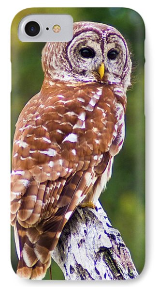 Barred Owl IPhone Case by Bill Barber