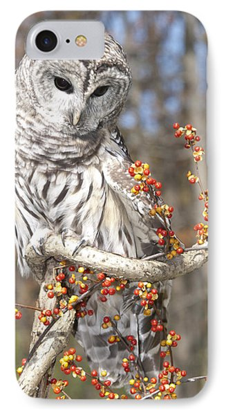 Barred Owl Portrait Phone Case by Cindy Lindow