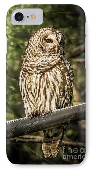 Barred Owl IPhone Case by Robert Frederick