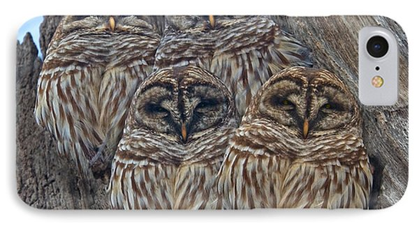 Barred Owls Who Are You IPhone Case by Betsy Knapp