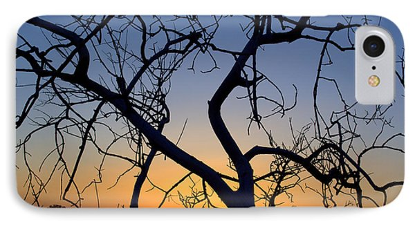 IPhone Case featuring the photograph Barren Tree At Sunset by Lori Seaman