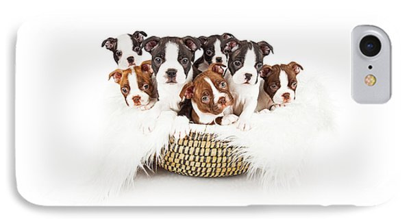 Basket Of Boston Terrier Puppies IPhone Case
