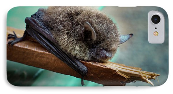 IPhone Case featuring the photograph Bat Rehoused by Jean Noren