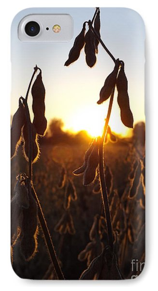 Beans At Sunset IPhone Case by Erick Schmidt