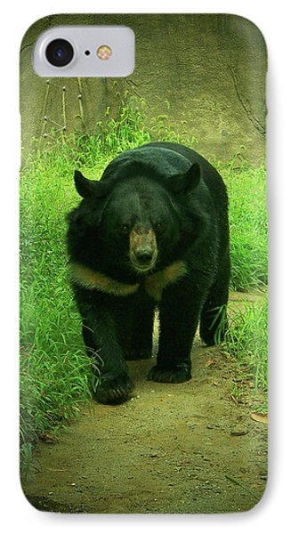 Bear On The Prowl IPhone Case by Trish Tritz