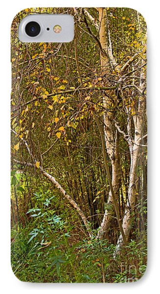 IPhone Case featuring the photograph Bearch by Viktor Savchenko