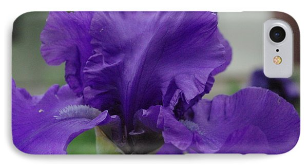 Bearded Blue Iris IPhone Case by Robyn Stacey