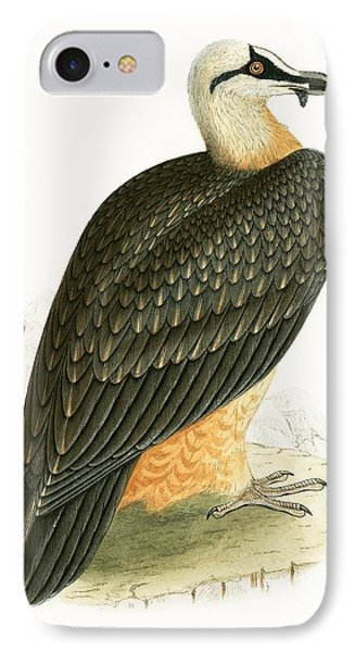 Bearded Vulture IPhone 7 Case by English School