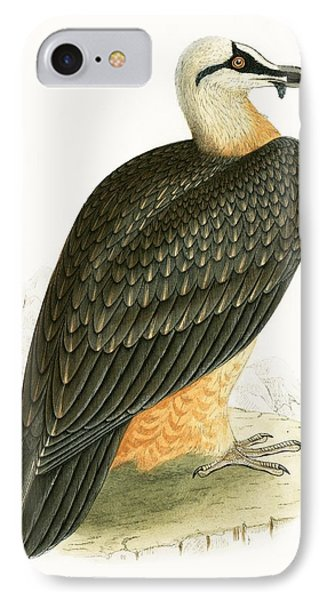 Bearded Vulture IPhone Case by English School