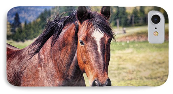 Beautiful Bay Horse In Pasture IPhone Case by Tracie Kaska