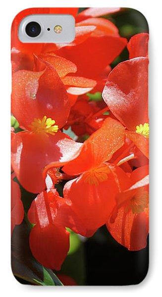 Beautiful Begonias Phone Case by Lynne Guimond Sabean