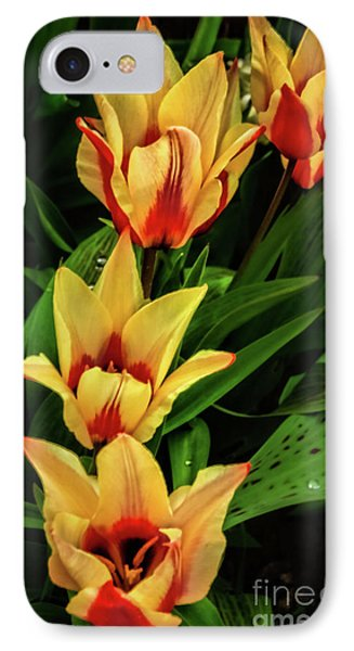IPhone Case featuring the photograph Beautiful Bicolor Tulips by Robert Bales