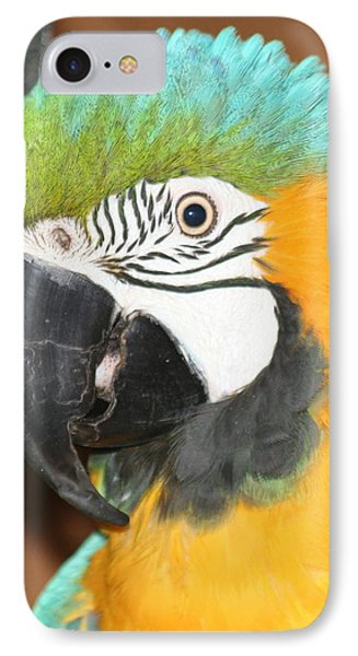 IPhone Case featuring the photograph Beautiful Bird by Diane Merkle