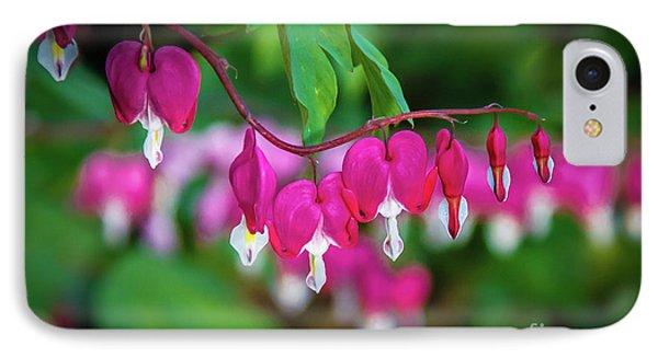 Beautiful  Bleeding Hearts IPhone Case by Robert Bales
