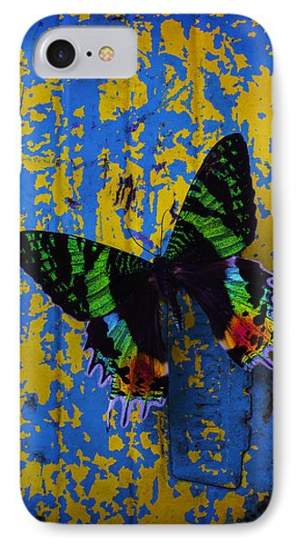 Beautiful Butterfly On Painted Wall IPhone Case by Garry Gay