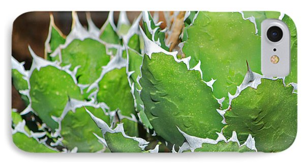 IPhone Case featuring the photograph Beautiful Cactus by Donna Greene