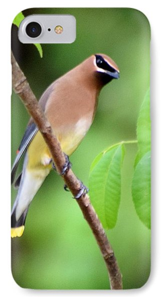 Beautiful Cedar Wax Wing  IPhone 7 Case by Sheri McLeroy