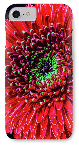 Beautiful Details Of Gerbera Daisy Phone Case by Garry Gay