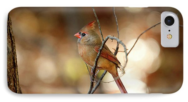 IPhone Case featuring the photograph Beautiful Female Cardinal by Darren Fisher
