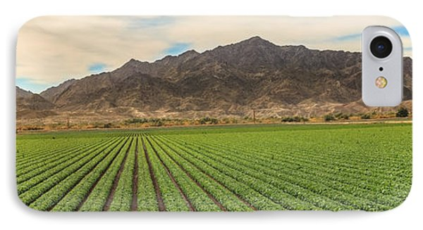 Beautiful Lettuce Field IPhone Case by Robert Bales