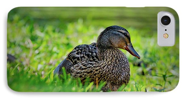 IPhone Case featuring the photograph Beautiful Mama Duck by Linda Unger