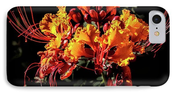 Beautiful Mexican Bird Of Paradise IPhone Case by Robert Bales