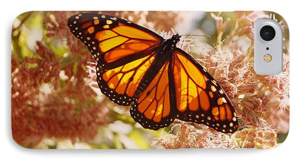 Beautiful Monarch IPhone Case by Beth Collins