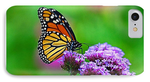 IPhone Case featuring the photograph Beautiful Monarch by Rodney Campbell