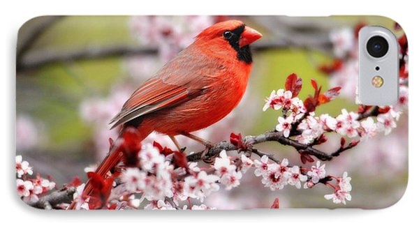 Beautiful Northern Cardinal IPhone Case by Trina Ansel