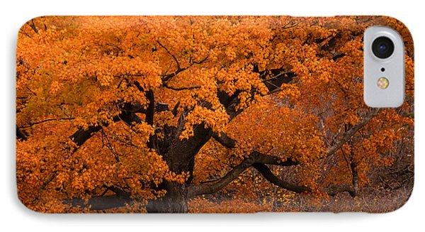 Beautiful Orange Tree On A Fall Day IPhone Case