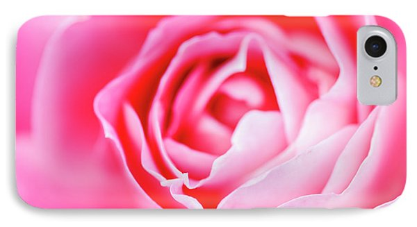 Beautiful Pink Rose Closeup IPhone Case