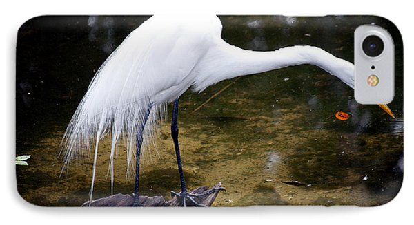 Beautiful Plumage IPhone Case by Kenneth Albin