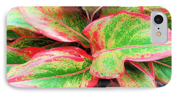 IPhone Case featuring the photograph Beautiful Red Aglaonema by Ray Shrewsberry