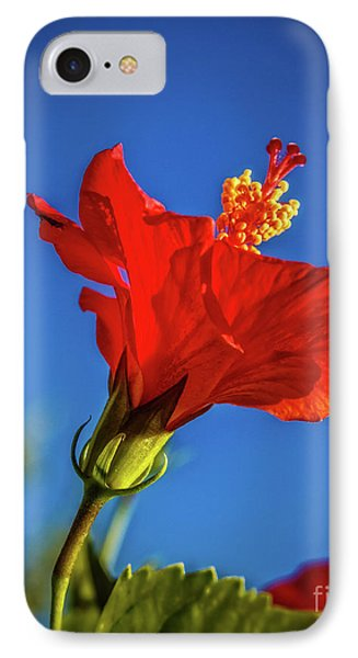 Beautiful Red Hibiscus IPhone Case by Robert Bales