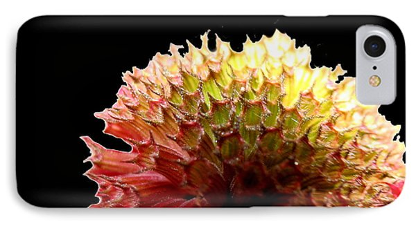 Bee Balm IPhone Case by Diane Merkle