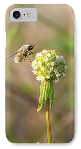 Bee Fly On A Wildflower IPhone Case by Christopher L Thomley