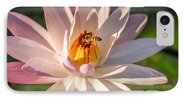 Bee Goodness IPhone Case by Liesl Walsh