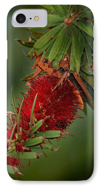 IPhone Case featuring the photograph Bee In Red Flower by Joseph G Holland