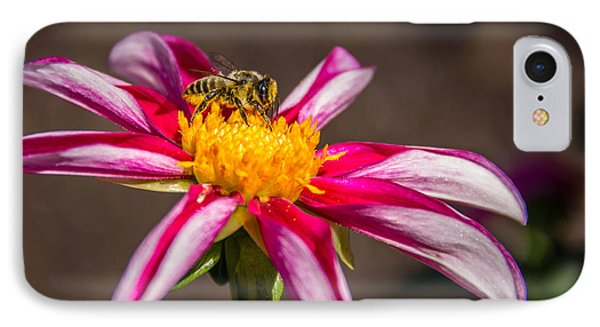 Bee On Dahlia IPhone Case by Randy Bayne