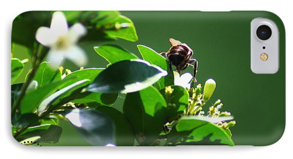 Bee On Jasmine IPhone Case by Shelley Overton