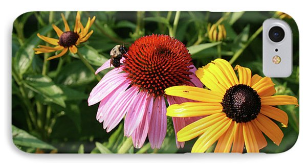 Bee On The Cone Flower IPhone Case by Greg Joens
