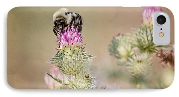 Bee On Thistle Weed IPhone Case by Laurinda Bowling