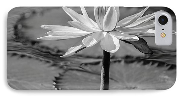 Bee On Waterlily, Black And White IPhone Case by Liesl Walsh