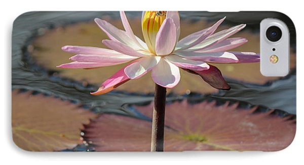 Bee On Waterlily IPhone Case by Liesl Walsh