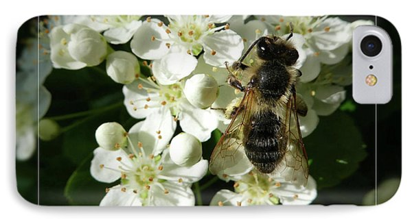 Bee On White Flowers 2 Phone Case by Jean Bernard Roussilhe