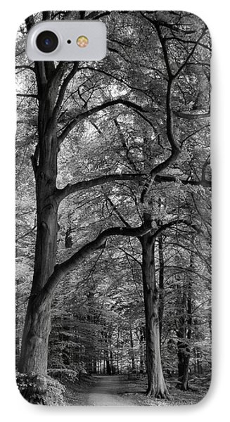 Beech Forest - 365-222 IPhone Case by Inge Riis McDonald