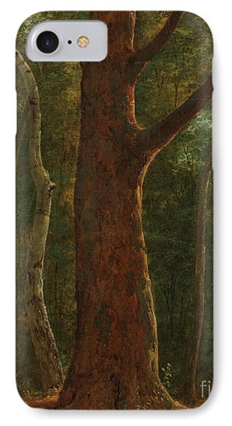 Beech Tree IPhone Case by Celestial Images