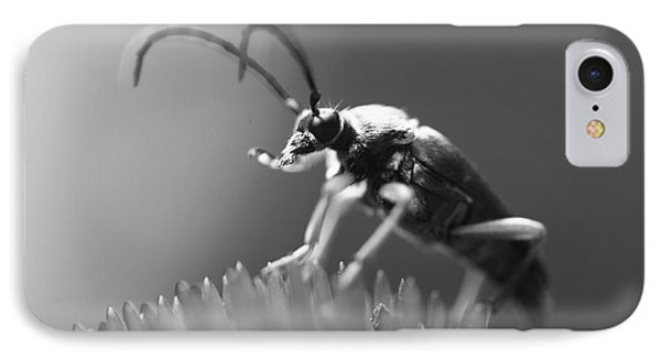 Beetle In Black And White IPhone Case by Brian Magnier