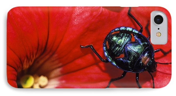 Beetle On A Hibiscus Flower. IPhone Case